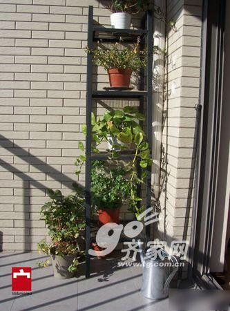 阳台上,放着我们的花架.图片