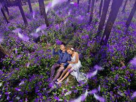 紫色丁香洒满天 映衬我们浪漫纯洁之爱