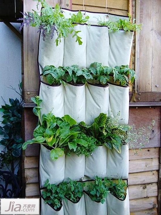 绿色植物墙上挂 16图家居绿意巧点缀