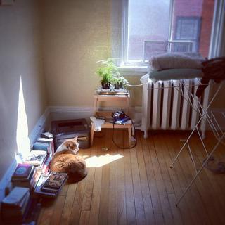 爱猫一族的幸福生活 随自自在的温馨家