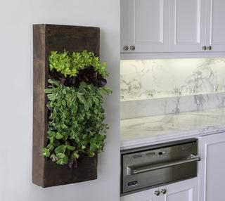 乐活厨房 大自然在家里看得见