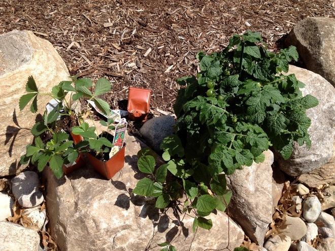北美家庭別墅 在這里盡情培養一個年輕的園丁