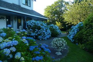 """花园设计 打造平凡之美的""""日光花园"""""""