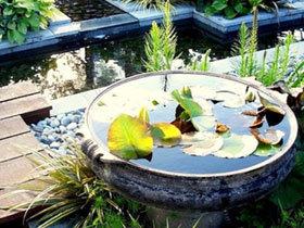 17款花园必备盆栽 给花园添点绿色