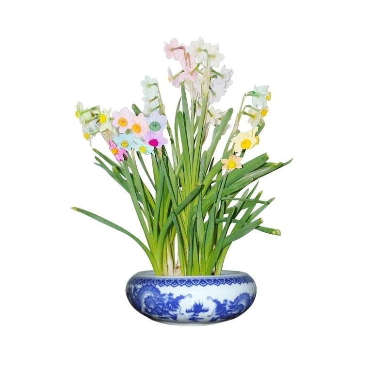 水仙花在风水学上的作用可谓与别不同,如果能适当地使用,更加能达到它