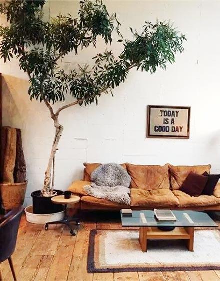 在家种棵大树好静心