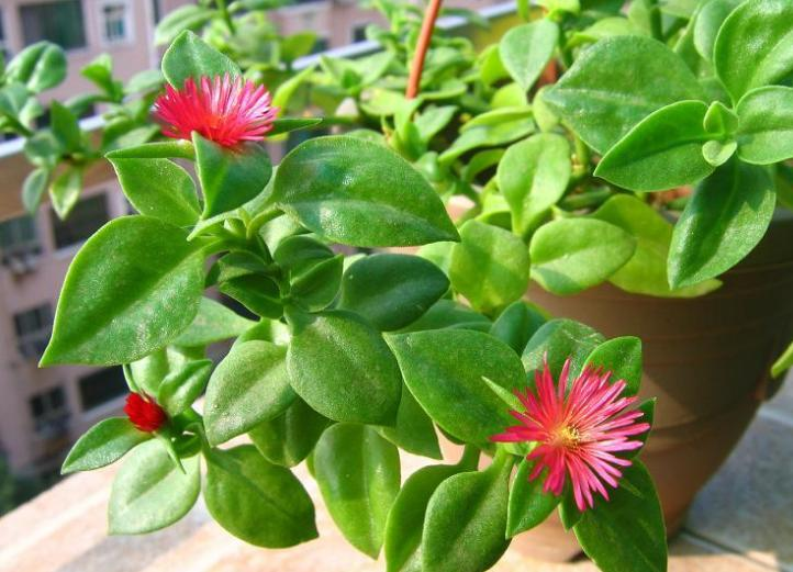 什么植物吸甲醛最好 吸甲醛最好的植物