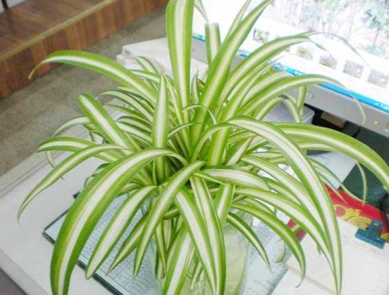 去甲醛最好的植物有哪些