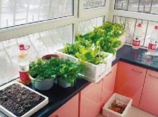阳台种菜用什么盆好