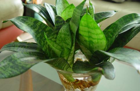 室内最好养的植物有哪些种