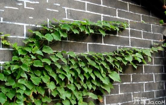 沈阳大树装假树叶 室内如何搞好真绿化图片