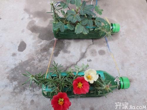 如何利用废旧塑料瓶做花盆 低碳环保有高招