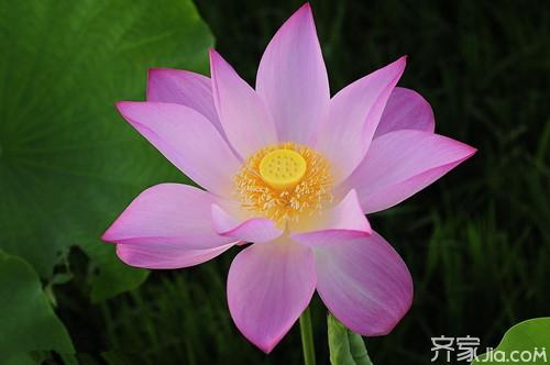各种盆栽花卉名称及图片欣赏大全图片