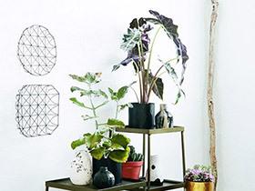 花草的无限可能 13个室内植物摆放效果图