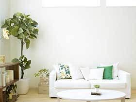 巧妙植物改善新家  10图室内植物装饰图片