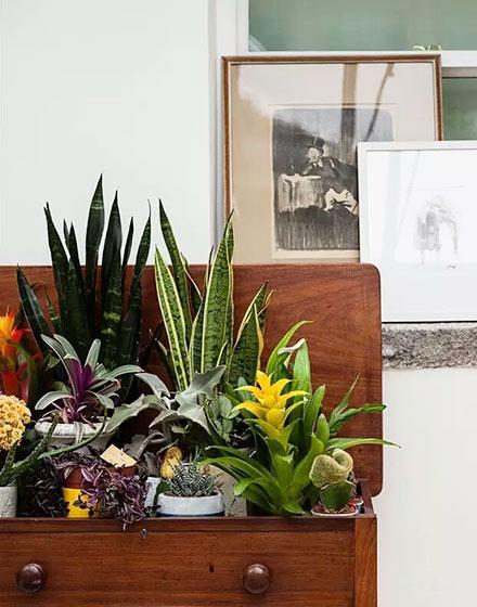 室内绿色植物摆放效果图