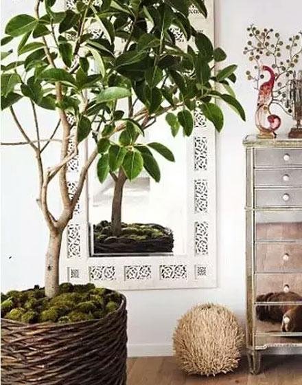 客厅绿色植物摆放设计图