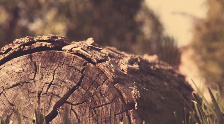 实木家具哪种木材好 如何鉴别实木家具好坏