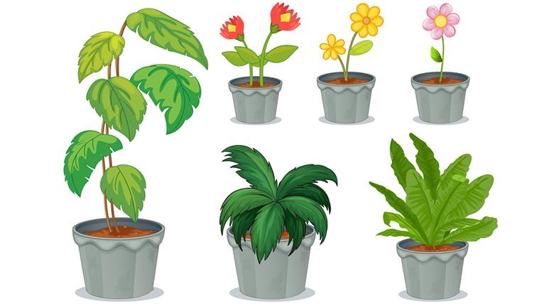 吸甲醛最好的方法 植物吸甲醛有效果嗎