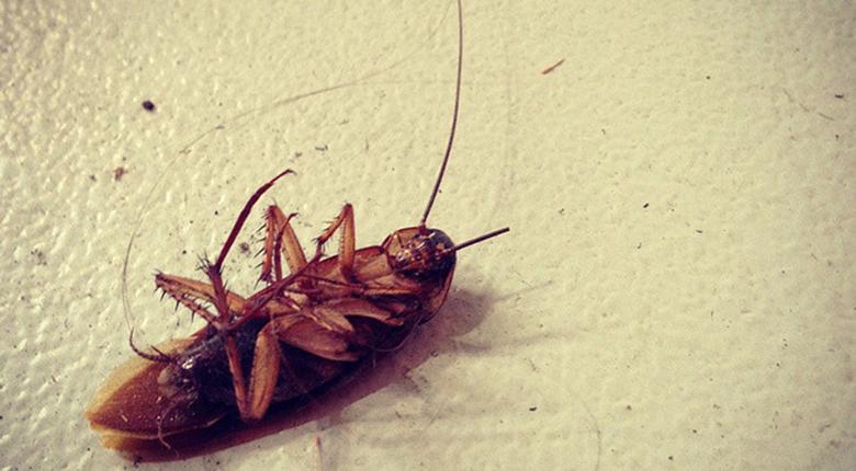 家里有蟑螂怎么辦 有蟑螂要如何處理
