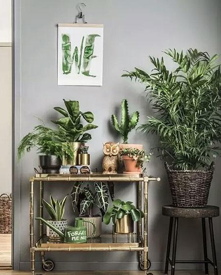 玄关置物架植物摆放效果图