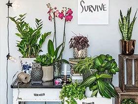 10个室内植物摆放图片 打造有氧植物角