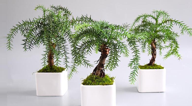 吸收甲醛的室内植物有哪些 排名一决高下