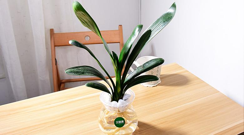 水养植物有哪些最好养 水养植物如何养