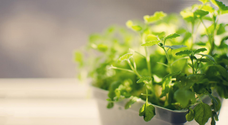 室内绿植品种有哪些 室内绿植如何选