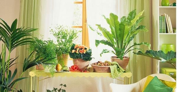 卧室适合养什么植物 哪些植物适合放卧室