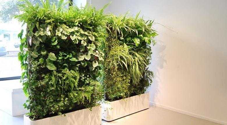 室内绿化植物有哪些 室内绿化植物需要注意什么
