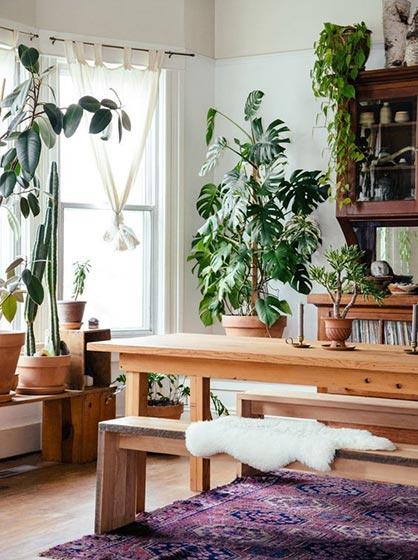 卧室室内植物图片