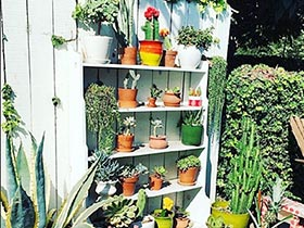 绿色好心情  10款植物布置装修图