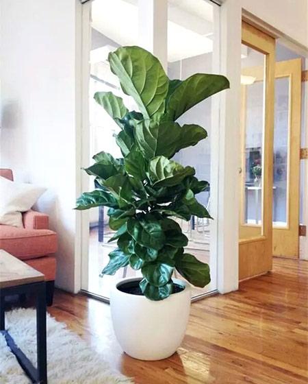 客厅绿色植物摆放图片大全