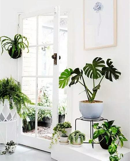 室内绿色植物效果图大全