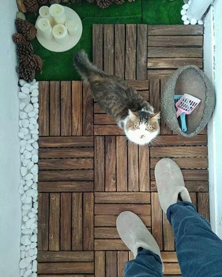 25平小户型一居木地板设计
