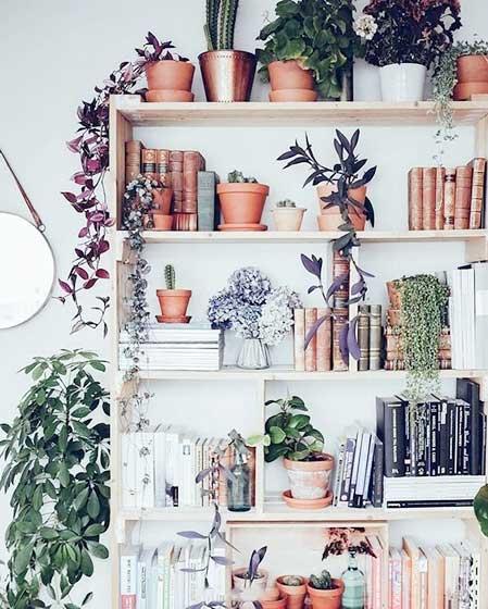 室内植物书架设计图片