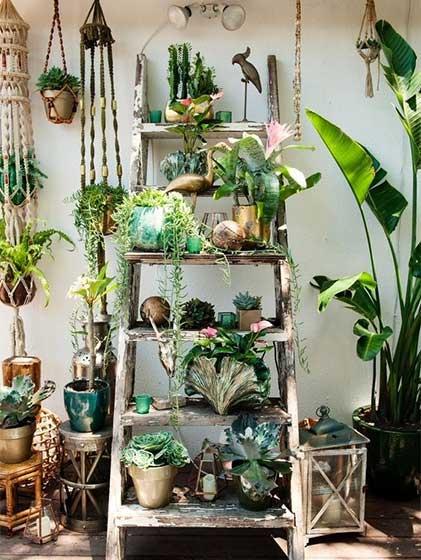 室内植物收纳梯图片