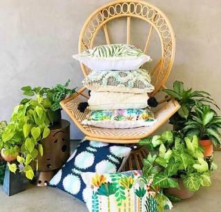 室内绿植布置参考图片