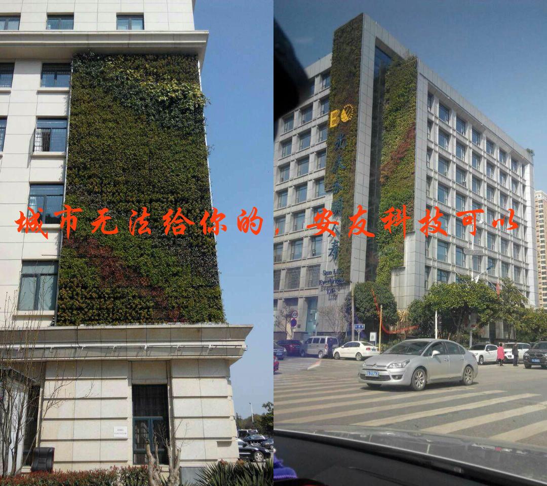 安友科技墙面绿化案例