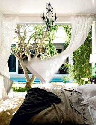 植物卧室装修欣赏图片