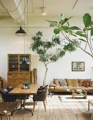 客厅植物摆放图片大全