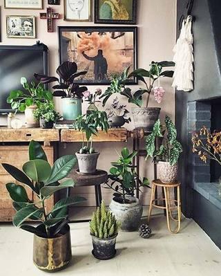 室内植物摆放设计实景图