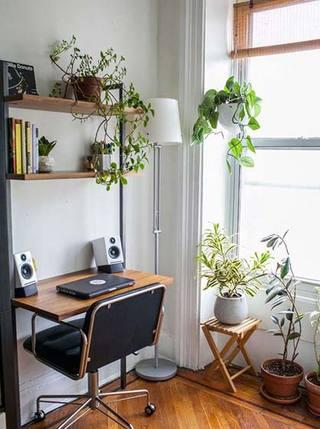 室内植物摆放装修图