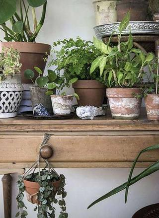 室内植物摆放设计参考图