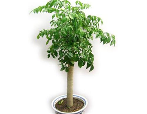 健康树封面素材