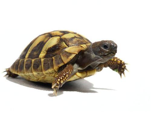 """让我们的生活变得更加有趣,当然一些比较""""懒""""的人,就喜欢养上一只乌龟"""