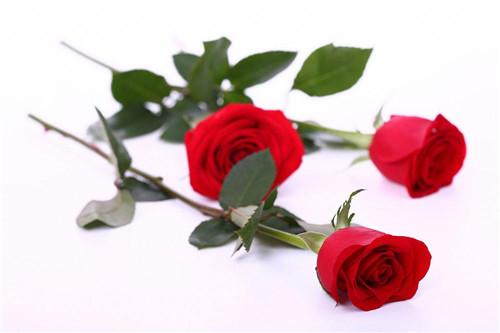 玫瑰花的作用及功效 玫瑰花茶适合什么体质的人