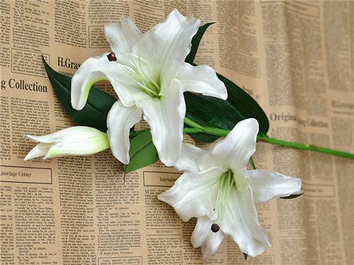香水百合花语是什么 香水百合与普通百合的区