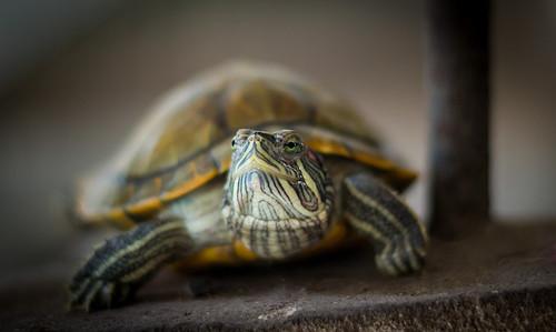 暴君的吃食秘籍饲养天堂分享物长得快攻略乌龟2乌龟图片